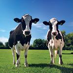 Novità sul packaging del latte da SMI